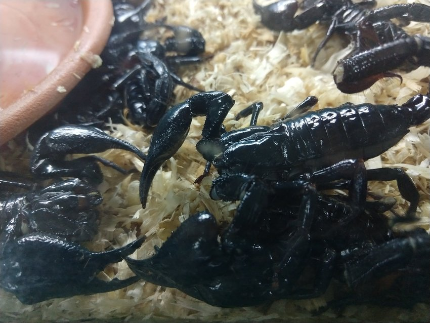 Weird Foods to try scorpion
