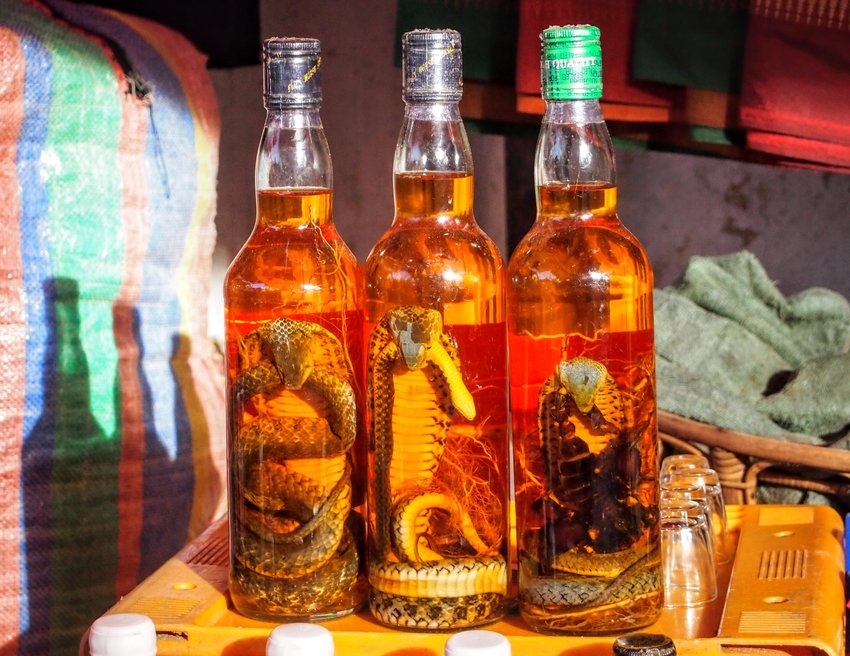 Weird Foods around the world snake wine