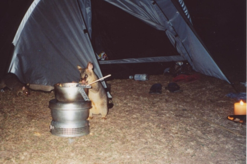 wildlife stealing food while camping in Australia